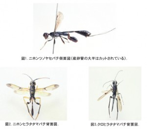 insect66_2_155