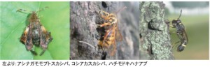 insect67_2_131